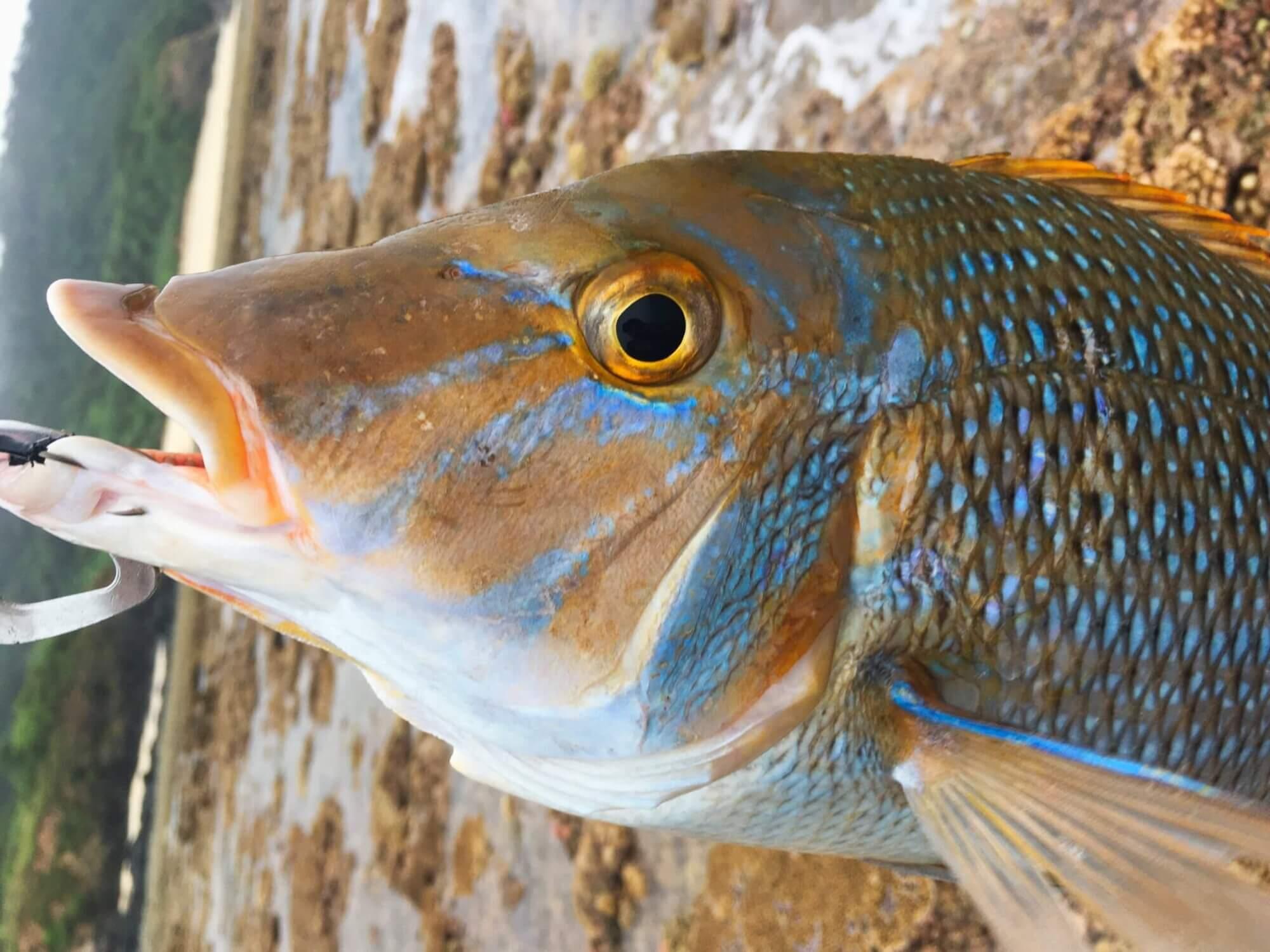 Wave Fishing Community